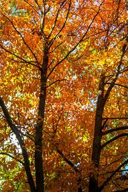 Pennsylvania Forest