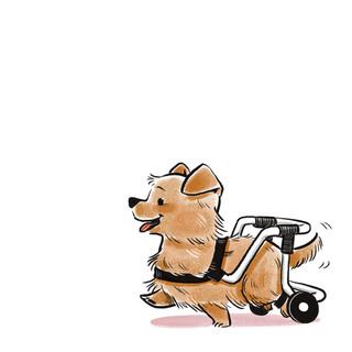 Underdog (Norfolk Terrier)