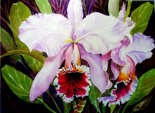 orquidea br-rosa 2.JPG