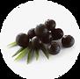acai berry.png