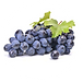 graped seed.png