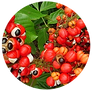 guarana extract.png