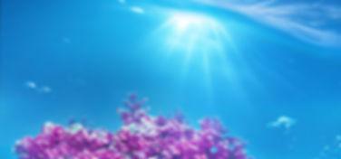 Aquamin.jpg