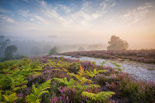 New Forest Mist - 018