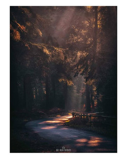 Autumnal Lanes__A firm favourite from la