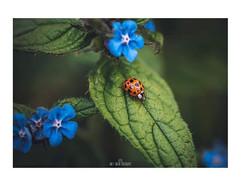 Ladybird  Fact: A ladybird may consume 5