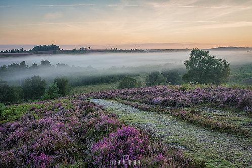 Rockford Common Mist - 013