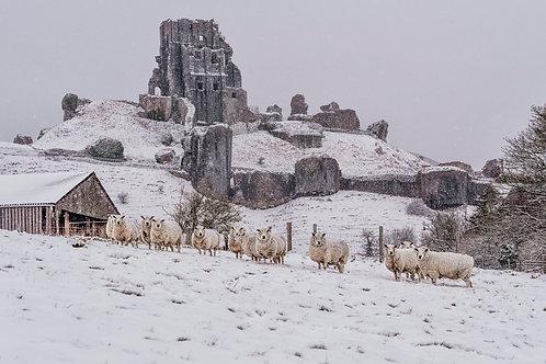 Snowy Corfe -023