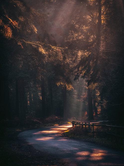 Autumnal Lanes - 029