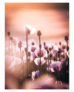 Fields of Dreams__Morning everyone and a