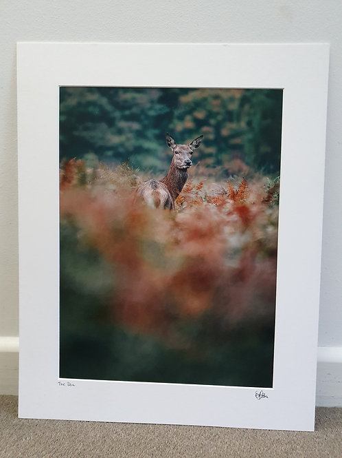 SALE - Mounted Print - The Doe