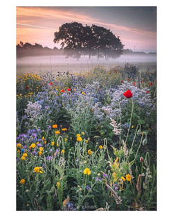 A Touch of Mist__Good morning everyone!