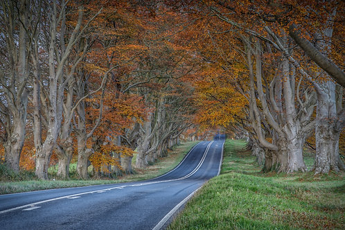 The Road to Dorset - 014