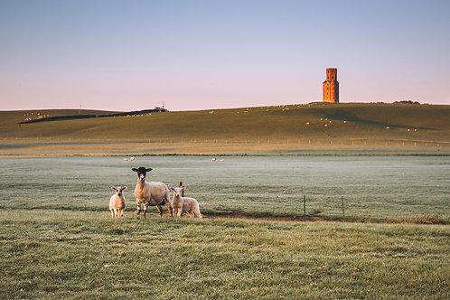 Horton Sheep - 060