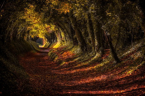 The Magical Tunnel of Trees - 030