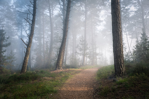 Wareham Forest in the Mist - 064