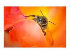 The Pollen Hunter  Morning everyone! I h