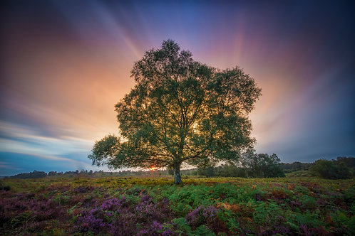 Tree of Life - 034