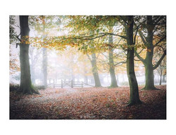 The Canopy__When the New Forest is shrou