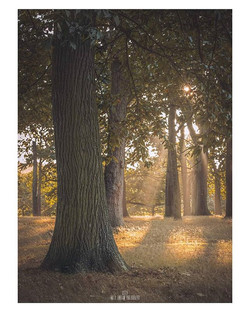 Autumn Light__Visiting a woodland is gre