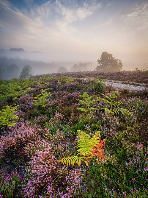 New Forest Colours - 019