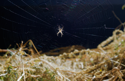 Friendly neighborhood spider