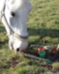 malerei-pinsel pferd.jpg