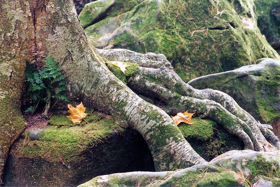 104-Durward Roots.jpg