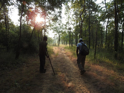 A Walk In The Park: Satpura