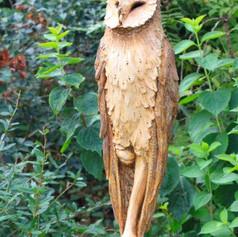 Owl posting
