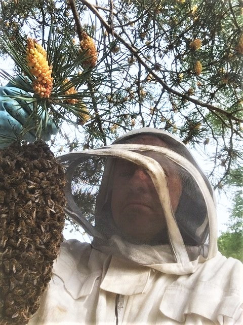 Busy Bees - Ronin Mole & Pest Control