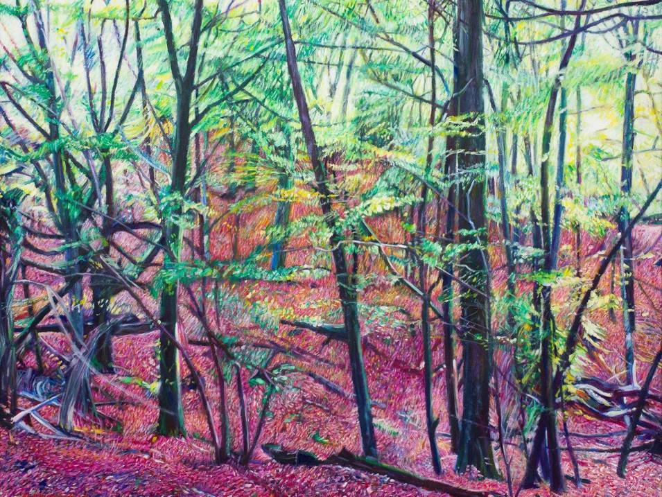 Woodland in Autumn at Burnham Beeches
