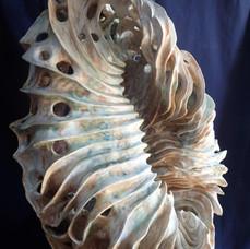 Shell Ripples Of Life