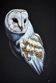 'Owl' by Andrea Meakin