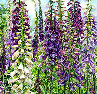 'Foxgloves' by Susie Lidstone