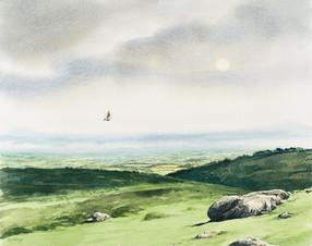 Skylark over Dartmoor