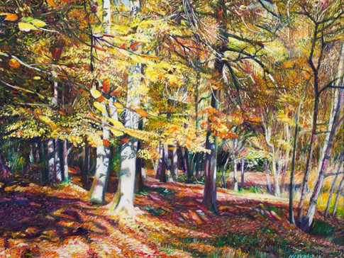 Trees in Autumn at Burnham Beeches