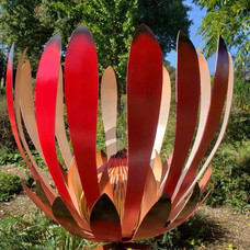 Scarlet Protea