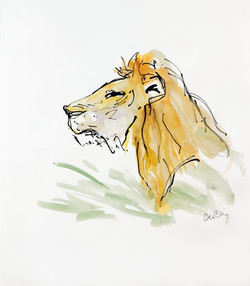Marsh Pride Lion