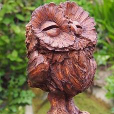 Charismatic Owl