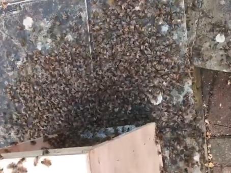 Swarm relocation