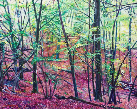 Woodland in Autumn at Burnham Beeches