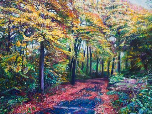 Pathway In Autumn at Burnham Beeches