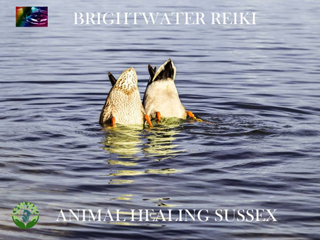 Animal Healing Sussex collaboration