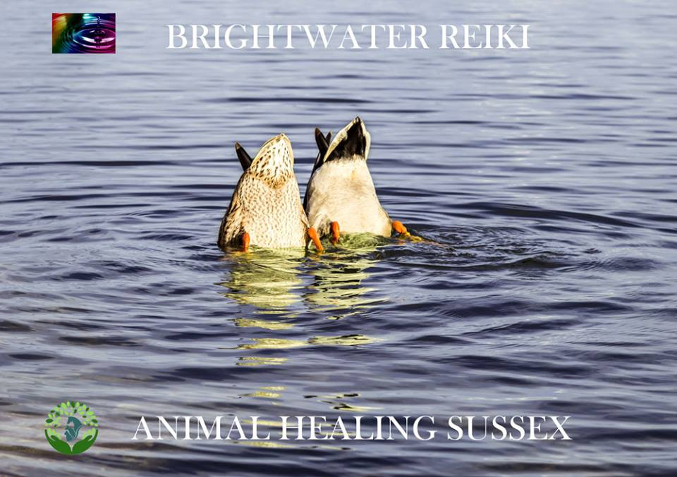 Animal Healing Sussex