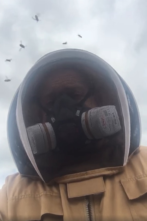 Ronin Mole & Pest Control