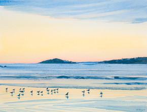 Colony of Gulls
