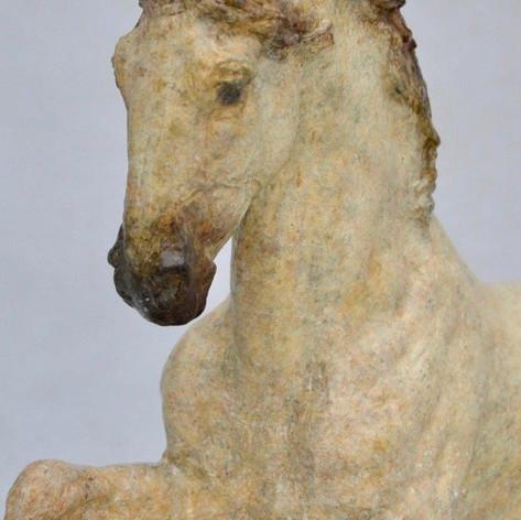 Stepping Spanish Horse