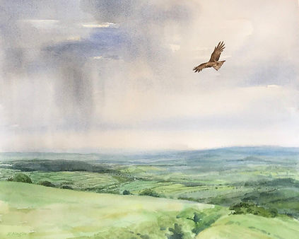 Red Kite over Dartmoor by Eleanor King