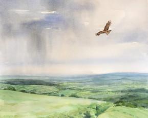 Red Kite over Dartmoor